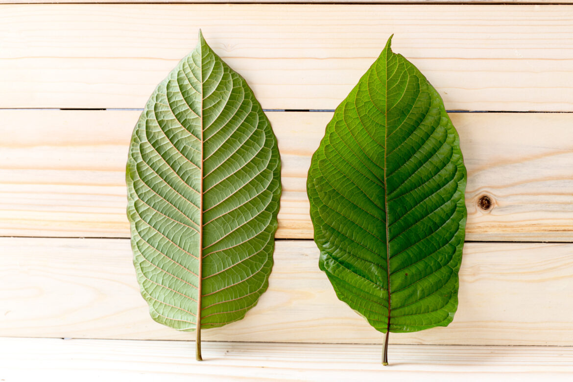 What is the legal status of Kratom in the United States? Is kratom going to be illegal? Click here to learn everything you need to know.